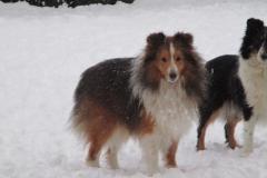 Pinto im Schnee1