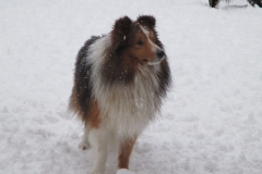 Pinto im Schnee4