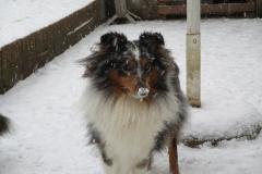 Randy im Schnee1