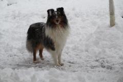 Randy im Schnee