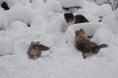 Sheltiekinder beim Schneetoben