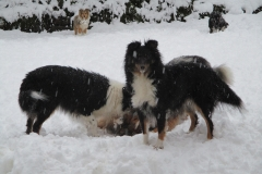 Suse im Schnee2