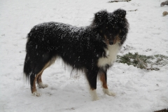 Suse im Schnee