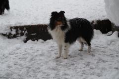 Terry im Schnee3