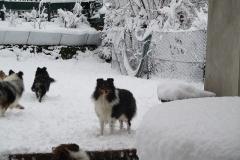 Terry im Schnee