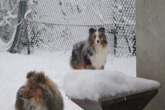 Udin im Schnee5