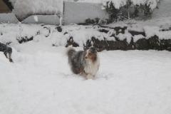 Udin im Schnee