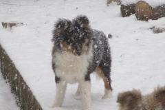 Varina im Schnee
