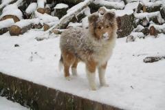 Viva im Schnee 1