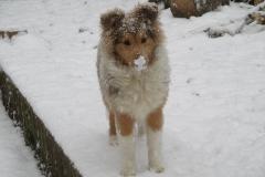 Viva im Schnee