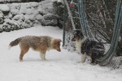 Viva und Varina im Schnee
