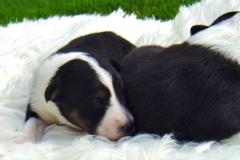 Rica und Roxy mit 2 Wochen - Bild 2