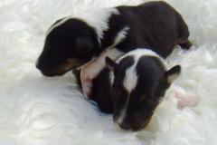 Rica und Roxy mit 2 Wochen - Bild 3