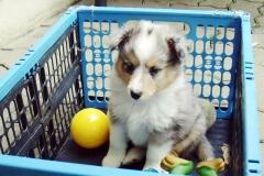 Romeo mit 6 Wochen