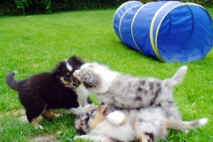 Roxy, Romeo und Randy mit 8 Wochen