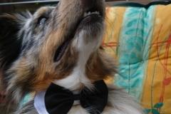 Rocky im Hochzeitdress