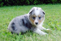 Romeo mit 4 Wochen