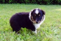 Roxy mit 4 Wochen