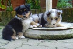 Usko und Udin mit 6 Wochen