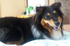 Yoshi (Ursus) aus dem U-Wurf